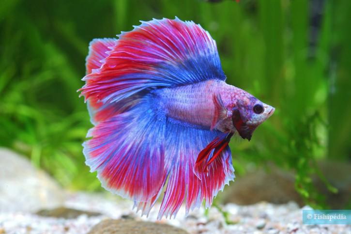 Ne les poissons caoutchouc sexe tgp@todorazor.com